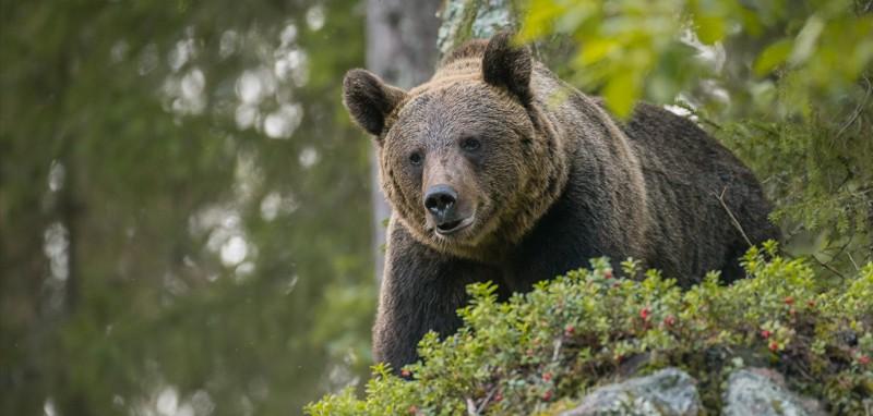 Difendiamo gli orsi