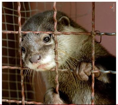 GIORNATE NAZIONALI: Apriamo le gabbie e chiudiamo gli allevamenti per animali da pelliccia!
