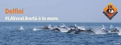 1° TAPPA #LAVeraLibertà dei delfini è in mare! Il tour del mega delfino LAV sulle spiagge italiane parte da Bari
