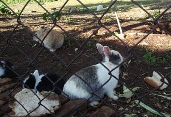 LAV Roma supporta il salvataggio di circa 50 conigli a Marino (Roma)