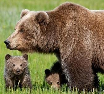 Giustizia per l'orsa Daniza: LAV Roma manifesta davanti a Ministero Ambiente il 15 settembre