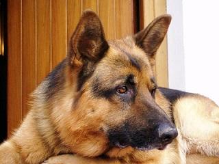 Tragedia di Fiano Romano (Roma). LAV addolorata dice no a uccisione cane e chiede formazione e prevenzione aggressività.