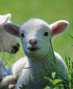 Festa del sacrificio - Rischio violazioni su animali