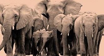 Presidio e concerto per salvare rinoceronti ed elefanti a Roma il 4 ottobre.