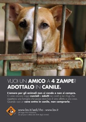 Nuova campagna di sensibilizzazione - adozioni