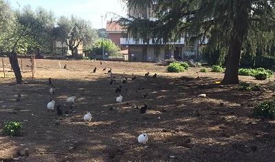 Lav Roma cerca adottanti per i 60 conigli di Marino (RM) in pericolo. Ecco a chi rivolgersi.