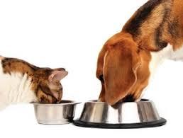 Raccolta di cibo per cani e gatti abbandonati