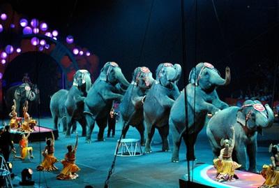 LAV Bolzano: Circo con animali, diseducativo per i più piccoli.