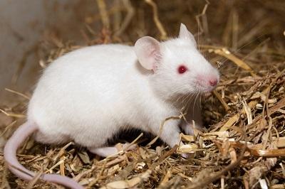Bruxelles rifiuta l'iniziativa Stop Vivisection. Noi continueremo a lottare!