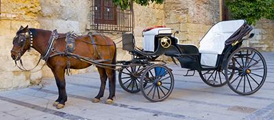 Vicenza. Passeggiate in carrozza nel centro storico. Il nostro Comunicato stampa