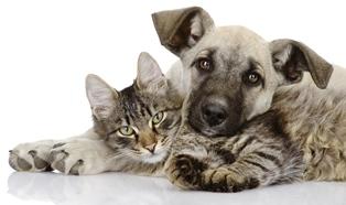 Animali domestici, un centralino per soccorrerli, attivo 24 ore su 24