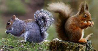 Perchè sto con gli scoiattoli
