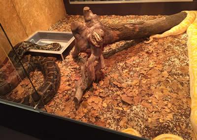 LAV: Mostra dei serpenti, carenze nella modalità di detenzione. La LAV chiede l'intervento del servizio veterinario per garantire il rispetto della normativa provinciale.