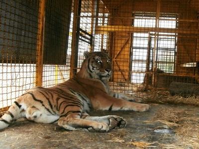 Rho: Limitazione al parco animali