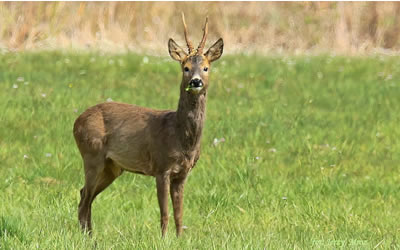 Alto Adige, dal 1° maggio inizia la caccia.