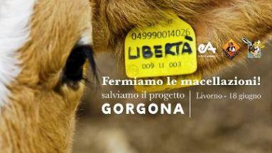 Manifestazione  a sostegno del PROGETTO GORGONA