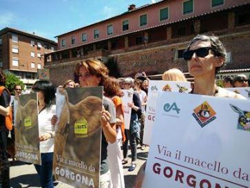 """""""Gorgona, stop alle macellazioni"""": il flashmob  della LAV a Livorno"""