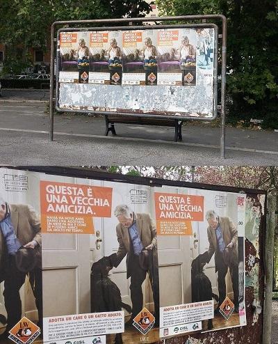 """Comunicato LAV Roma. """"Questa è una vecchia amicizia"""": affissione manifesti a Roma per l'adozione di cani e gatti adulti da parte di persone anziane"""