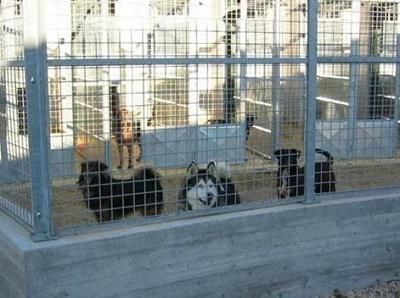 Comunicato LAV Roma - L'IMPEGNO DI LAV ROMA A TUTELA DEGLI ANIMALI OSPITI DEL CANILE COMUNALE DELLA MURATELLA. DONATI 6.685 EURO PER SPESE VETERINARIE.