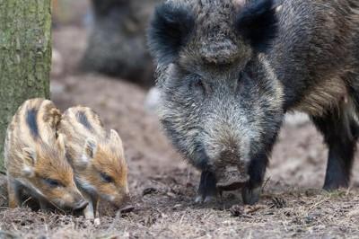 Mercoledì 30 novembre in Consiglio Regionale del Veneto in discussione la Legge regionale che vuole punire chi disturba la caccia: Sit- in a Venezia delle associazioni animaliste