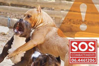 SOS COMBATTIMENTI - GAZEBO AL BORGO VERGINI