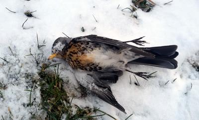 LAV e WWF, causa temperature rigide, inviata richiesta sospensione della caccia.