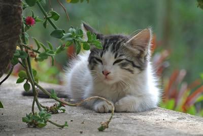 Colonie feline, IPES invia diffide proibendo la somministrazione di cibo ai gatti randagi, interviene la LAV.
