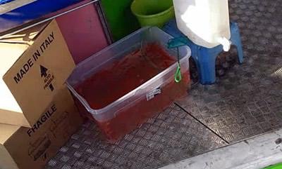Pesci rossi al luna park, CARENZE NELLA MODALITÀ DI DETENZIONE, confermata la nostra segnalazione.