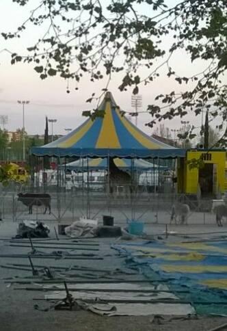 Esposto affissioni e volantinaggio abusivi sul territorio comunale di Perugia in relazione al Circo Nelly Orfei presso Pian di Massiano