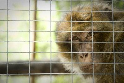 """Cena vegan benefit LAV Roma per adozione macaco giovedì 11 maggio al """"Ma Và?"""" (prenotazione via email)"""