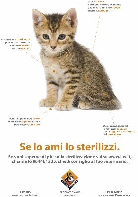 Campagna sterilizzazione gatti