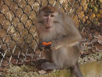 Il macaco Monky, salvato dalla vivisezione e adottato dalla sede LAV di Roma. Ora una cena benefit per lui mercoledì 11 ottobre alle 20:00