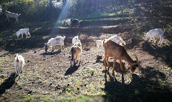 World Vegan Day 2017: Mercoledì 1 novembre con LAV Roma al rifugio Thegreenplace a Nepi