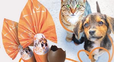 LAV IN PIAZZA! Regala una nuova vita a un cane o un gatto in difficoltà!