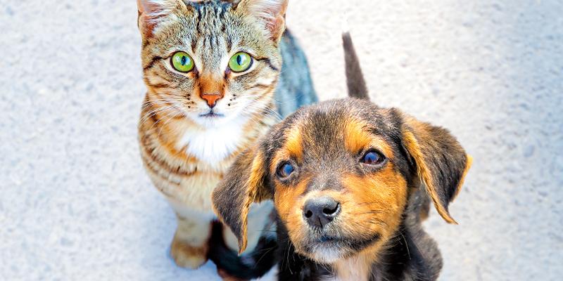 Prendersi Cura Di Cani E Gatti Lav