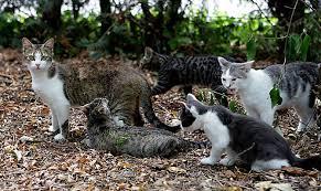 Attività della sede in favore dei gatti liberi delle colonie feline