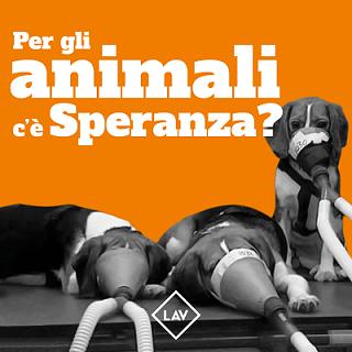 Per gli animali c'è Speranza? In piazza a Roma per evitare rinvio divieto a test d'abuso. Ecco i nostri tavoli.