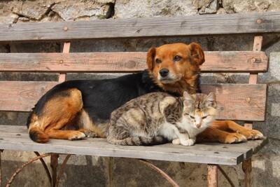 Approvato il nuovo regolamento tutela animali a Milano. Le nostre considerazioni.