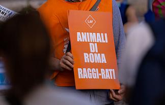 MANIFESTAZIONE ASSOCIAZIONI ANIMALISTE IN CAMPIDOGLIO PER PROTESTARE CONTRO IMPEGNI DISATTESI E TRADITI DA GIUNTA RAGGI.